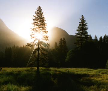 Five Evergreen Strategies for Employee Engagement in the Future Workplace