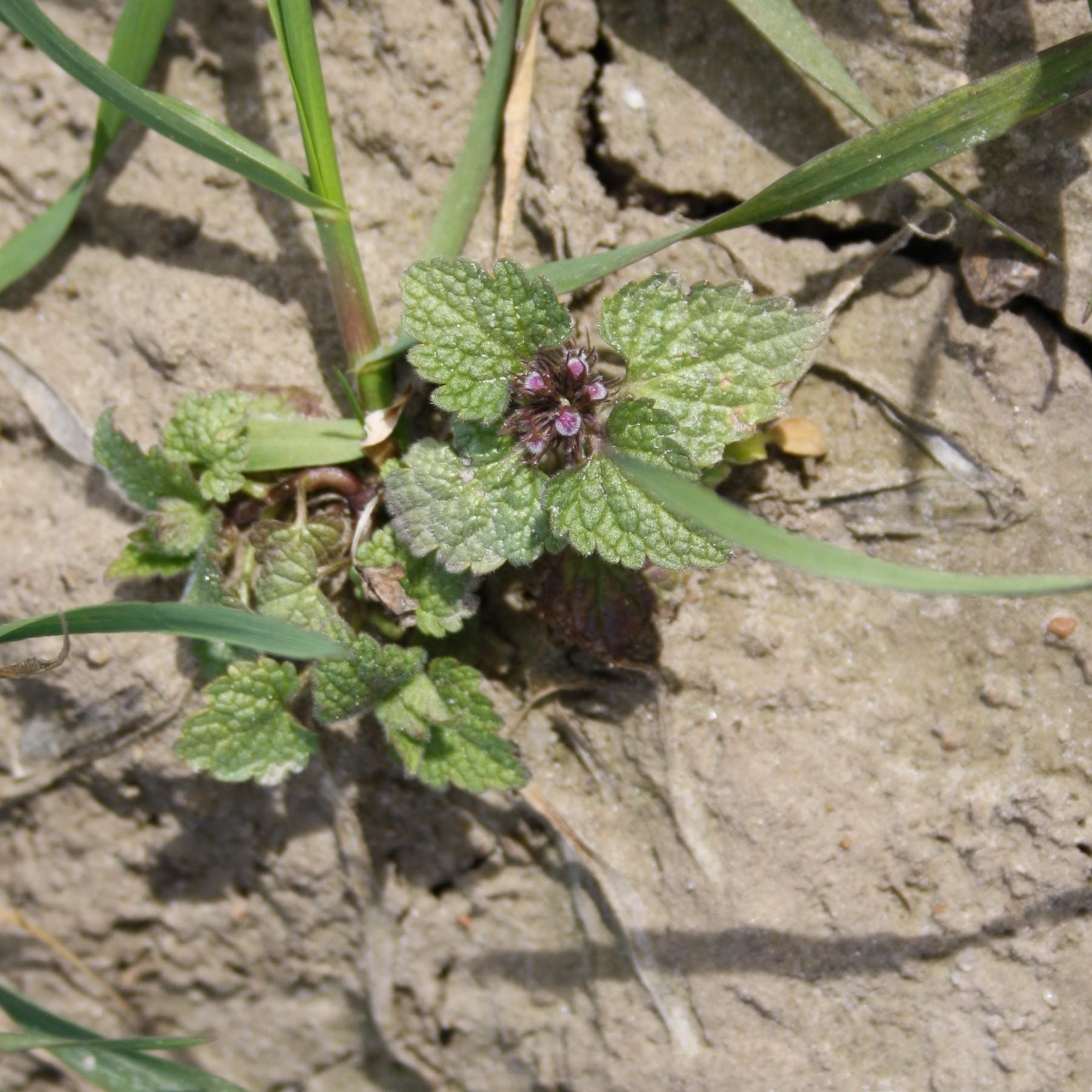 växt4