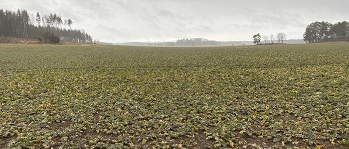 Örtogräsbekämpning i höstraps våren 2021