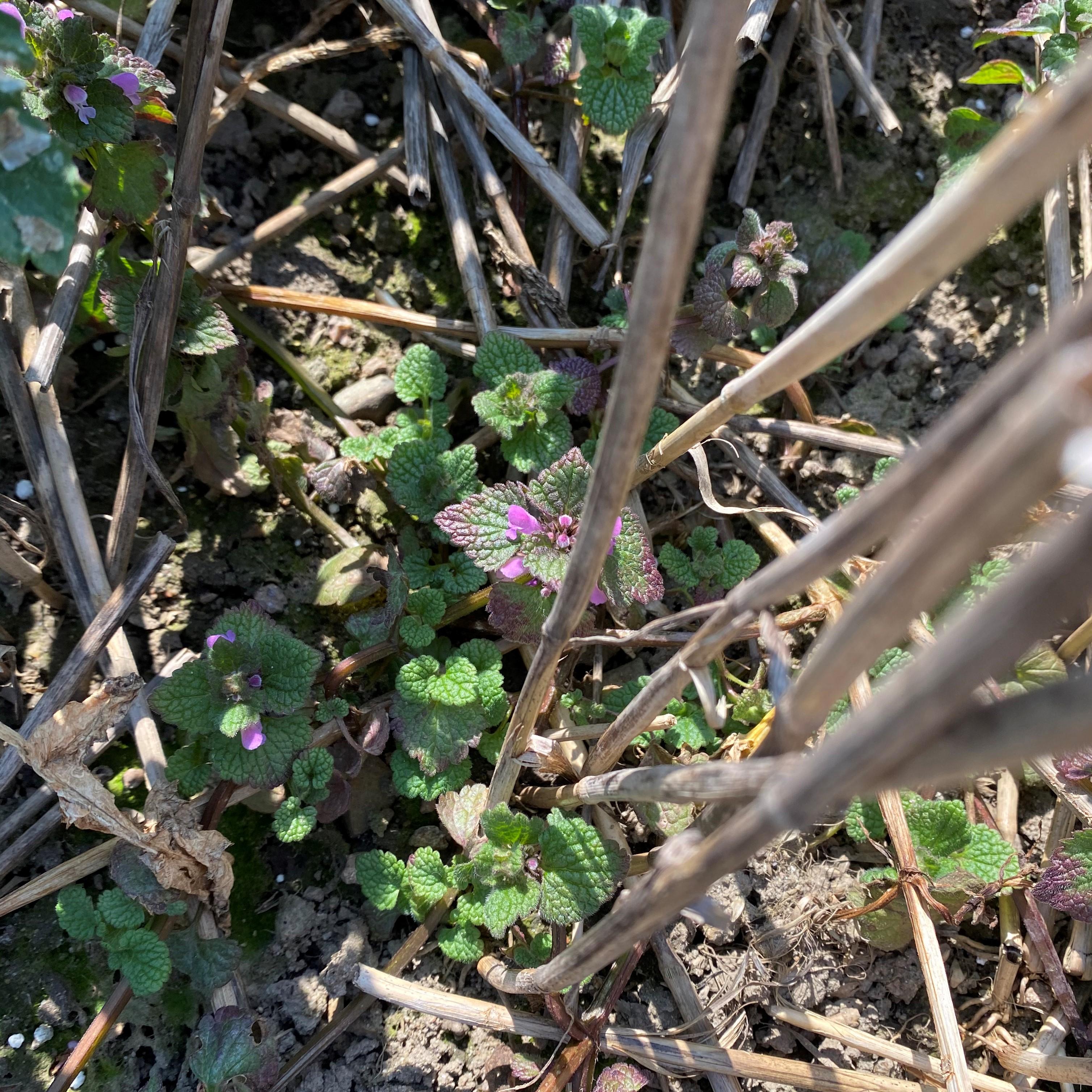 växt6