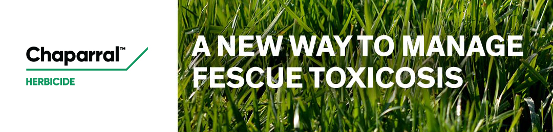A New Way To Manage Fescue Toxicosis